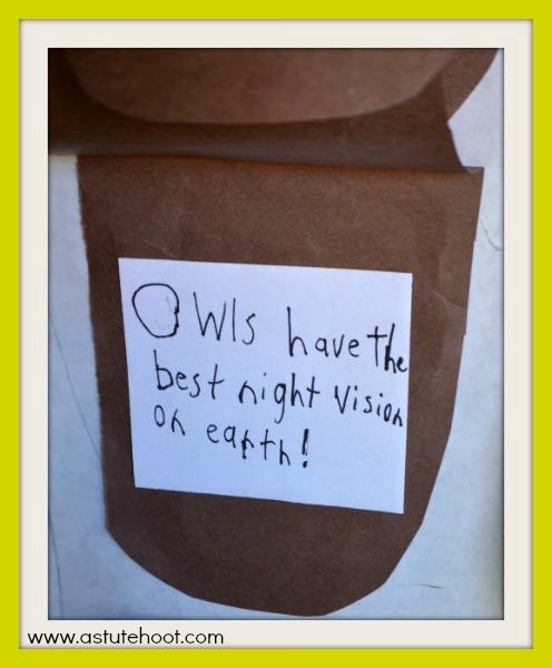 Owl Q&A door 2