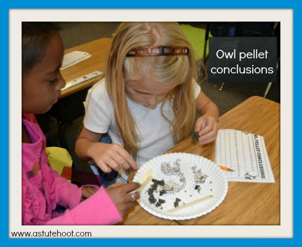 Owl pellet conclusions
