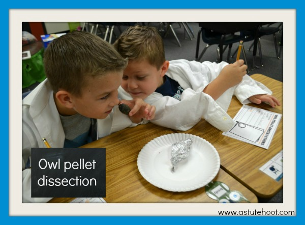 Owl pellet dissection 1