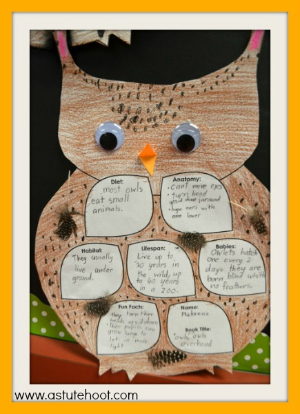 Owl report 2