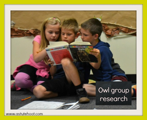 Owl research 1