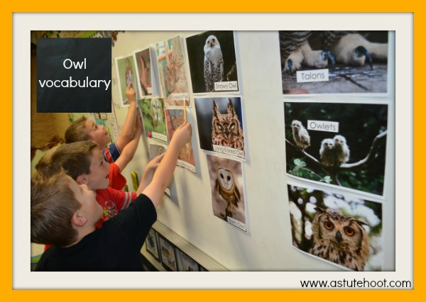 Owl vocabulary